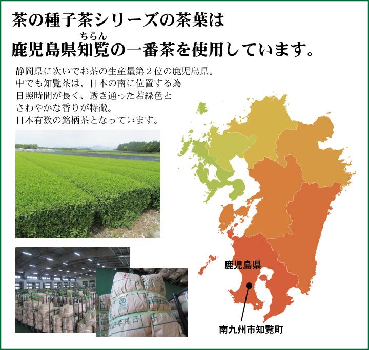 お茶の産地は鹿児島県知覧